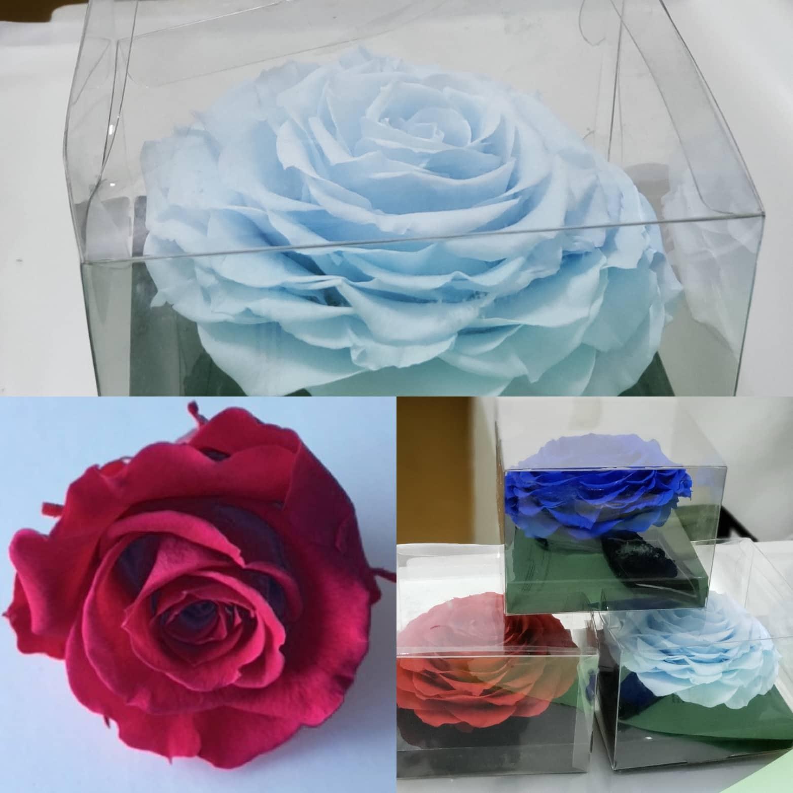 Preserved Rose in a Box